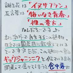 イヌサフラン/誕生花/標茶/A型看板/ホワイトボード/平田家具店/... おはようございます! 本日のホワイトボー…(1枚目)