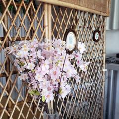春はもうちょい/北海道/標茶/桜/ひらた家具店 ひらた家具店のウインドウに飾ってある造花…(1枚目)