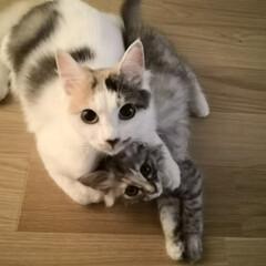 うちの子ベストショット/猫/猫2匹/保護猫/猫大好き 先輩と後輩です!