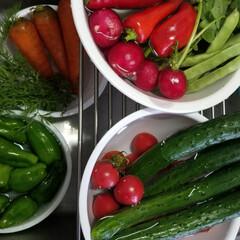ニンジンの葉/高知の野菜/おうちごはん ニンジンの葉はどうしたら、 美味しく食べ…
