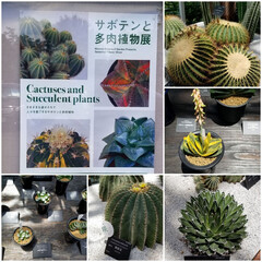 多肉植物/高知県/牧野植物園/ボタニカル/おでかけ 牧野植物園③