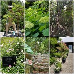 高知県/牧野植物園/おでかけ 牧野植物園②
