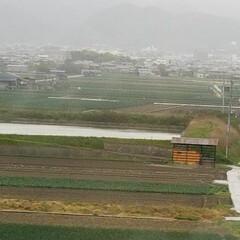 淡路島/玉ねぎ畑 果てしなく玉ねぎ畑🎵 淡路島の玉ねぎは甘…