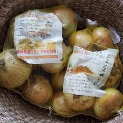 淡路島/新玉ねぎ 淡路島の玉ねぎが美味しくて 買いすぎちゃ…