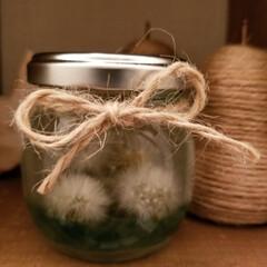たんぽぽの綿毛のハーバリューム/おうちごはんクラブ/雑貨/セリア/ハーバリウム トラのママさん💕 これが去年のたんぽぽの…