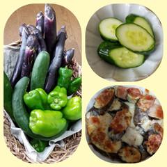 アラ!/おうちごはんクラブ 今日ご近所の方に頂いた野菜🥒🍆🎶 キュウ…(1枚目)