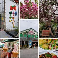 西島園芸団地/高知県/おでかけ イチゴのパフェを食べに寄ったはずがなぜか…