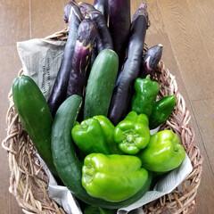アラ!/おうちごはんクラブ 今日ご近所の方に頂いた野菜🥒🍆🎶 キュウ…(2枚目)