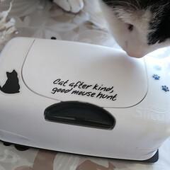 にゃん/ネコ/ねこ/やっぱり猫/ねこ好き/猫/... ウェットティッシュケースもやっぱり猫がい…