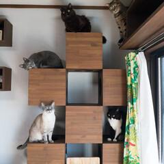 猫/ねこ/保護猫/キャットタワー キャットタワー満員御礼!