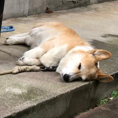 おやすみショット ぐっすり夢の中。声をかけても起きません。、