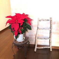 ポインセチア/自宅サロン/クリスマス