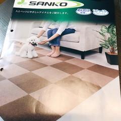 タイルマット タイルカーペット 吸着 床暖房対応 撥水タイルマット 無地 8枚入 30×30cm おくだけ吸着 サンコー(カーペット、マット)を使ったクチコミ「モニターキャンペーンに当選しました。 猫…」(3枚目)