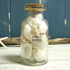 西海岸インテリア/ビーチ/シェル/貝/テラリウム/デコレーション コルク付きのボトルに入ったホワイトシェル…