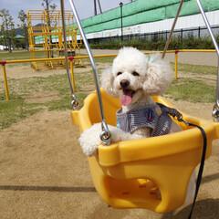 犬/ブランコ/公園/いぬ/わんちゃん/ペット こんにちは🐶  わんちゃんOKの公園にて…