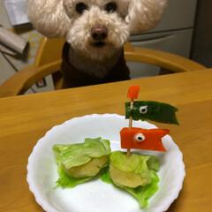 ごはん/鯉のぼり/わんちゃん/こどもの日/ペット 大きいお姉ちゃんに、作ってもらいました。…