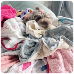 わんこ/洗濯物 太陽で干された洗濯物ってぬくぬくしてイイ…