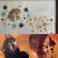 子猫/うちの猫/にゃんこ同好会/お絵描き まだ…カイ、リクと呼ばれていない時 小さ…(1枚目)