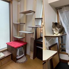 キャットタワーDIY/ラブリコ/ペット/猫/にゃんこ同好会/DIY/... ラブリコでキャットタワーをD IYしまし…