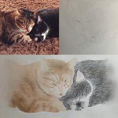 うちの猫/にゃんこ同好会/お絵描き 写真から下絵を写して… 色づけします😊  (1枚目)