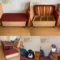 ベンチ/カラーボックス/ペット/猫/にゃんこ同好会/DIY/... 作業棚として使っていたカラーボックスを収…