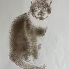 お絵描き/うちの猫/にゃんこ同好会/おうち時間 自粛生活中にPC環境を整えて お店のメニ…