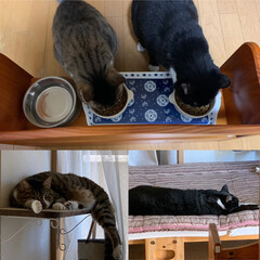 エサ台/猫のいる暮らし/ねこ/にゃんこ同好会 よく食べてよく寝て… 僕たち元気😊  秋…(1枚目)