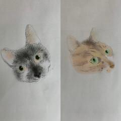 おうち時間/お絵描き/にゃんこ同好会/うちの猫 Kittens→Cats  立派な成猫さ…