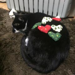 ペット/猫/にゃんこ同好会/クリスマス/ハンドメイド 寝ているすきに少しだけ飾りつけ😊