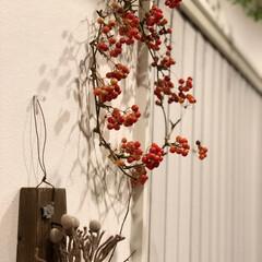 トヨトミストーブ/トヨトミ/ドライフラワー/観葉植物のある暮らし/観葉植物/サンキライリース/... クリスマス準備第三弾🎄笑笑 これで終わり…