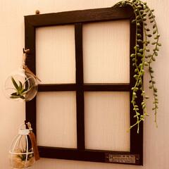フェイクグリーン/エアプランツ/窓枠風/DIY/雑貨/ハンドメイド 家にあった物だけで作りました  端材をノ…