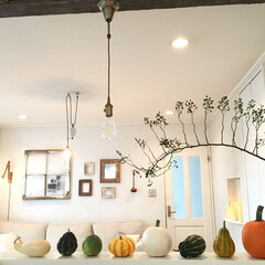 おもちゃかぼちゃ/かぼちゃ/秋/ハロウィン/インテリア/雑貨 キッチンカウンターにいろんな形や色のおも…
