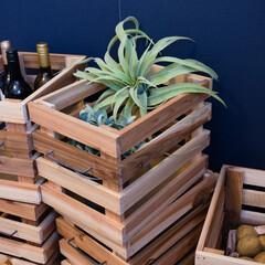 DIY/ハンドメイド/かすがい/杉/ベニヤ板/木箱/... 杉荒材とベニヤ板で作った木箱です。 取っ…(1枚目)