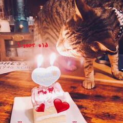 1歳/誕生日/ペット/スイーツ/ペット用スイーツ OREO☆彡.。 ¨̮♡⃛happybi…