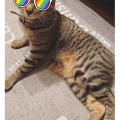 猫ちゃん 娘からのフォト パート2(ノ∀`笑) 変…
