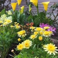 花/グリーン 足利フラワーパークにお花を見に来ました。…(1枚目)