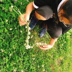 シロツメクサ/お家で過ごそう/コロナに負けるな/がんばれ日本 💠庭のシロツメクサも沢山咲きました💠  …