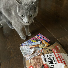 いなば チャオ CIAO 焼かつお 仔猫用  1本入×5個セット(せっけん)を使ったクチコミ「愛猫アークは5歳のお誕生日を迎えました。…」