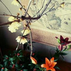 ロウバイ/花/生花 正月用に飾った花たちが咲いたのでup!ロ…