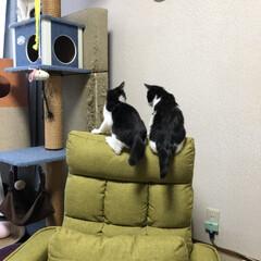 暮らし 2週間くらい前に子猫の片方が突然ケイレン…