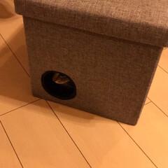 猫ハウス/DIY/ジグソー 収納ベンチで猫ハウスを作りました。  ジ…