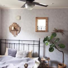 ウンベラータ/フェイクグリーン/シーリングファンライト/流木/寝室/DIY/... 寝室はリゾート風(のつもり)です♪ 流…