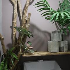 ターナー色彩 室内かべ用 ミルクペイントforウォール 水性塗料 450ml   ターナー(パテ)を使ったクチコミ「トイレの模様替えをしました! 玄関に置い…」(2枚目)