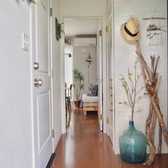 パッチワークデニム/インドアグリーン/デミジョンボトル/流木インテリア/流木/玄関/... 玄関は一年中デミジョンボトルと流木を束ね…