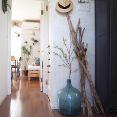 フェイクグリーン/デミジョンボトル/流木/インテリア/玄関 玄関には長い流木を束ねて立てかけたコート…
