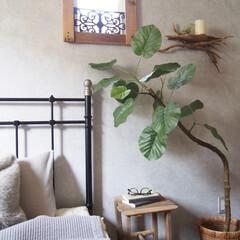 寝室/フェイクグリーン/ウンベラータ/ニトリ/流木/流木インテリア/... 寝室に置いているニトリのフェイクウンベラ…
