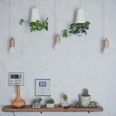ペンダントライト/インドアグリーン/アイビー/ポトス/スカイプランター/アロマディフューザー/... テレビ上のここにも流木を使って飾り棚を。…(1枚目)