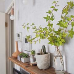 ヘデラ/賃貸併用住宅/インドアグリーン/リビング/インテリア アパートの花壇のグリーンが伸び過ぎて道路…(1枚目)