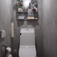 インテリア/インドアグリーン/フェイクグリーン/コンクリート風/モルタル風/インダストリアル/... 久しぶりのトイレです! ここはもう数年変…