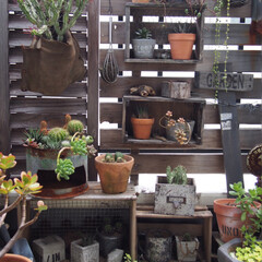 多肉植物/サボテン/ガーデン/ベランダ/ベランダガーデン/母の日/... 我が家はアパートの3階ですが、ダイニング…